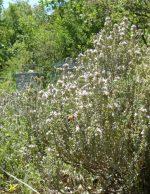 Miel de Thym La Butinerie en Provence Boulet