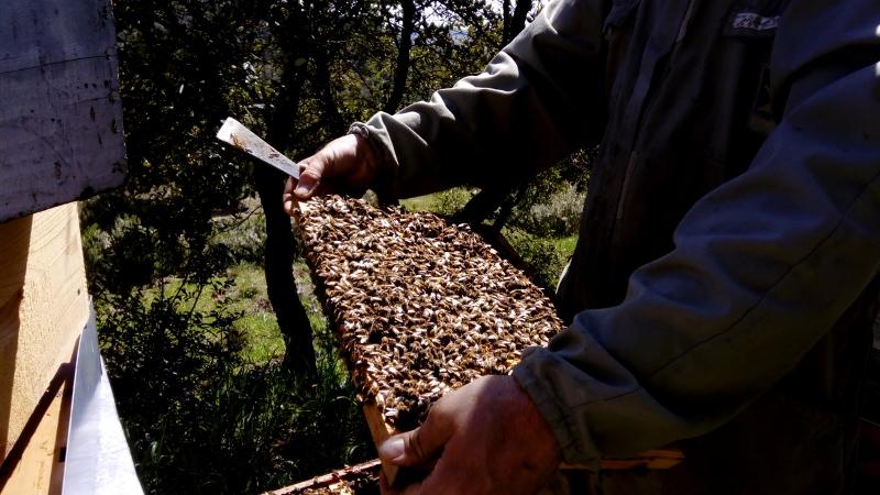 Elevage des abeilles La Butinerie