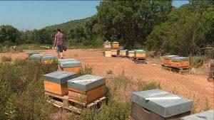 Reportage sur France 3 :  «Retour chez un apiculteur aux ruches sinistrées»