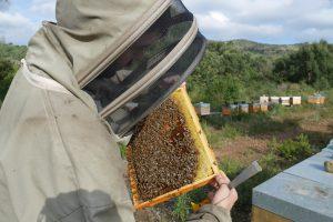 En ce moment au rucher…