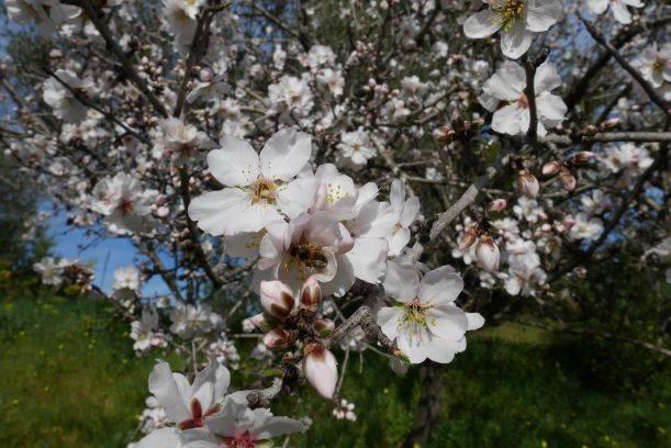 Visite de printemps